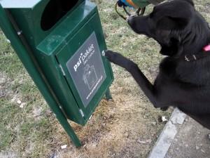 Psy w Siedlcach muszą mieć czipy. Fot.AB