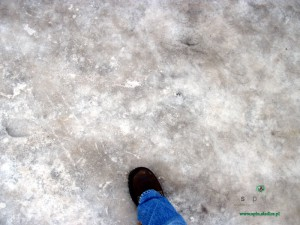 Siedleckie chodniki niczym nie różnią się od lodowiska Fot. BG